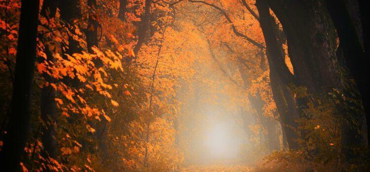 Wieso die Seele auch mal Herbst braucht